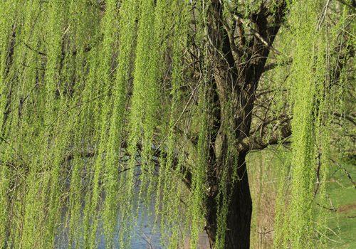 Northern VA Reiki Tree Photo
