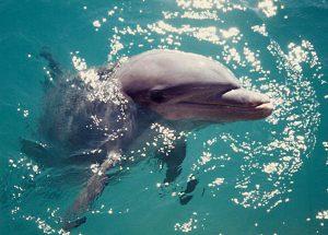 Northern Virginia Reiki Dolphins